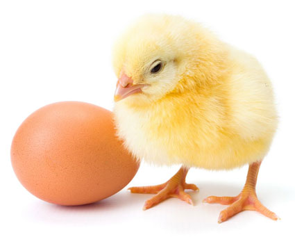 egg-and-chick-intro